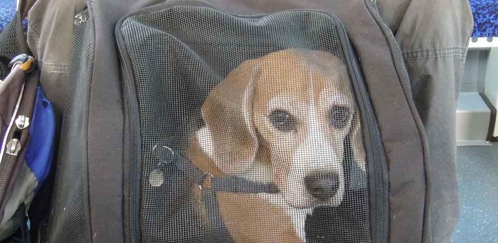 Como levar seu animal de estima��o em viagem (Flickr/Reprodu��o)