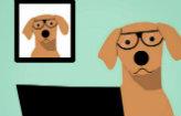 Vídeo games ajudam o cérebro dos cães (Reprodução)
