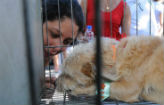 Feira de ado��o de c�es e gatos no domingo (Jorge Gontijo/EM/D.A. Press)