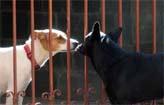 Paix�o entre vira-lata e cadela chama aten��o   (Beto Novaes/EM/D.A Press)