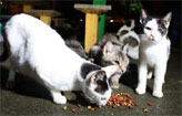 Acordo para proteger os gatos da Beira Rio  (Brenda Alc�ntara/Esp DP/D.A Press)