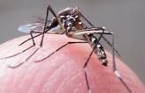 Nova estrat�gia de combate ao Aedes  (Rafael Neddermeyer/Fotos Publicas)