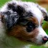 Super raças - Cães (Taís Nascimento/DP/DA Press)